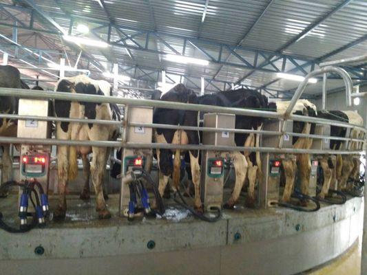 milking parlour_533_400_5